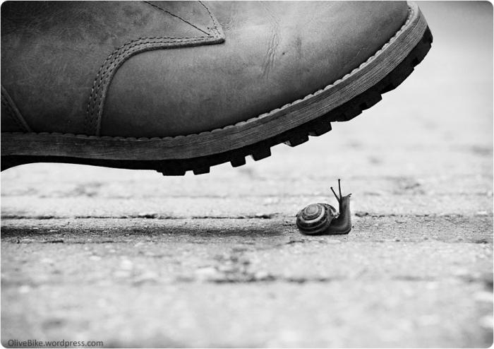 snail under leg